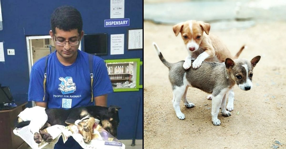 Hyd Man Opens Blood Donor Database For Injured Animals, Sign Your Pet Up For It!