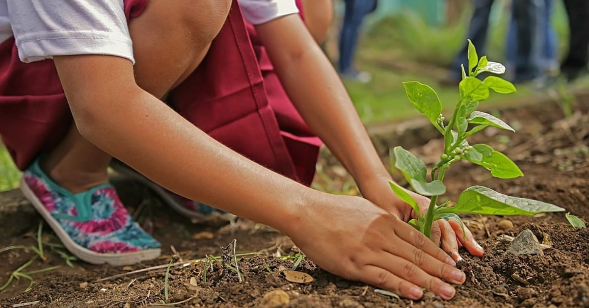 Rajasthan Makes Planting Trees Compulsory For Engineering Students!