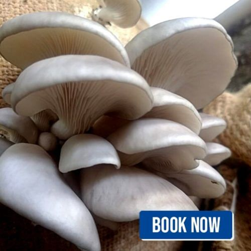 Mushrooms workshop vinay parade