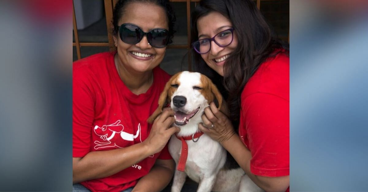 Once Caged, 465 Lab-Test Beagles Find Loving Homes – Thanks to 2 B'Luru Women!