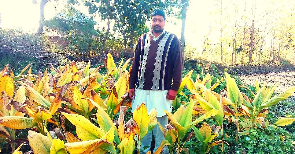 Sailing to Farming: Himachal Man Leaves Rs 2.5L/Month to Grow Chemical-Free Food