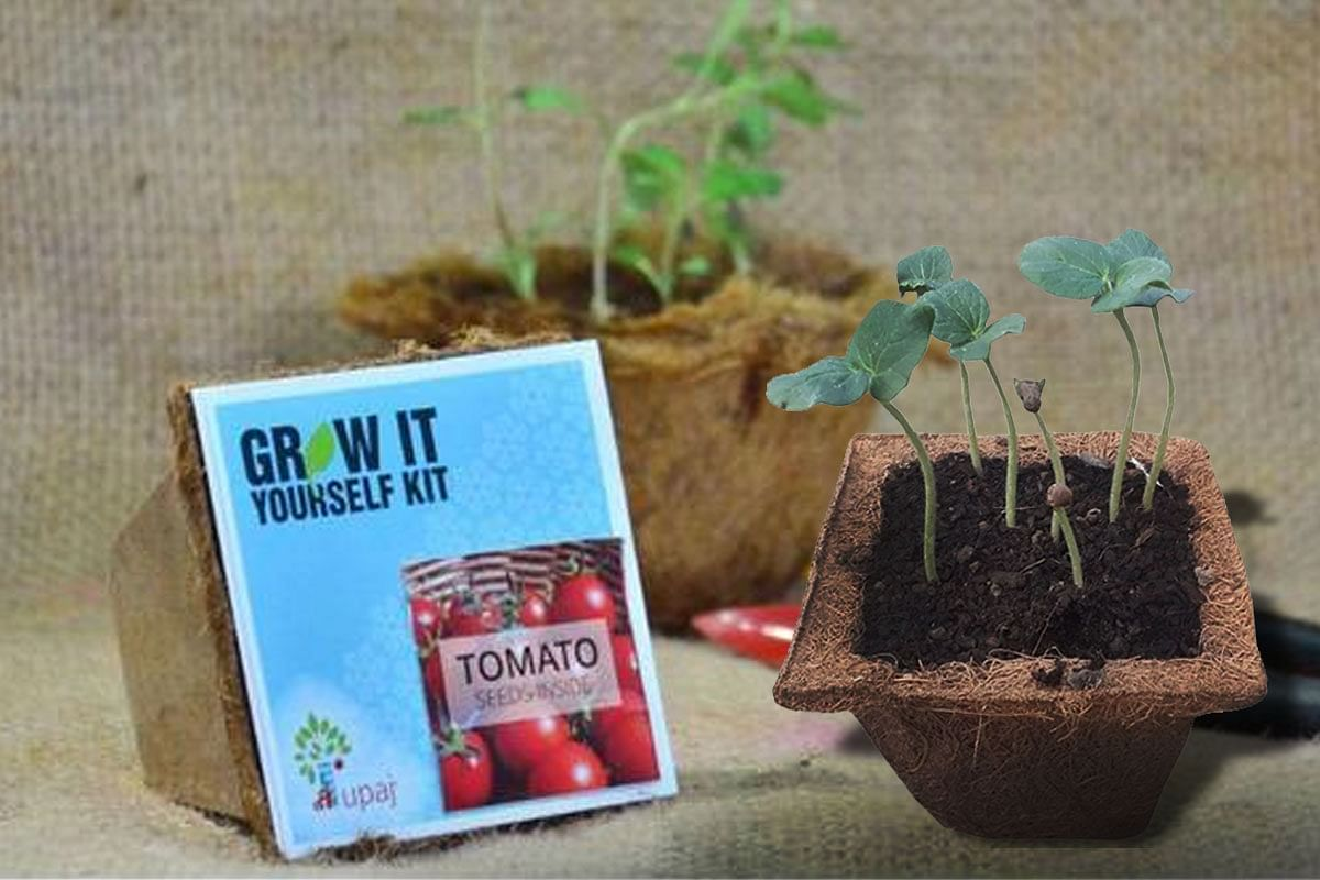 Want to Grow Your Own Veggies? This Rs 299 Kit Is All You Need to Get Started!