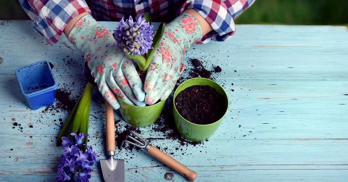9 Easy Steps To Pot a Plant Perfectly & Grow a Home Garden!