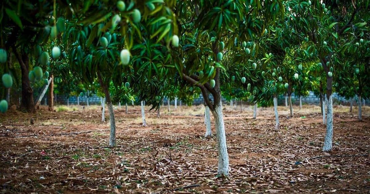 Telangana Family Turns 11-Acre Land Into Lush Fruit Forest