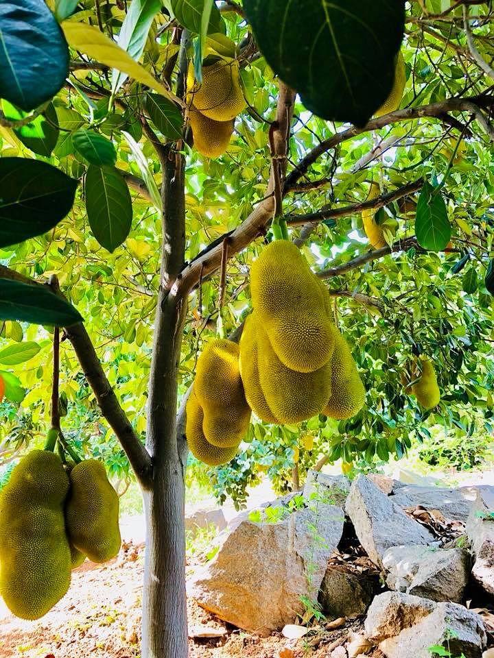 telangana Family turn land fruit forest organic mango sustainable workshop india