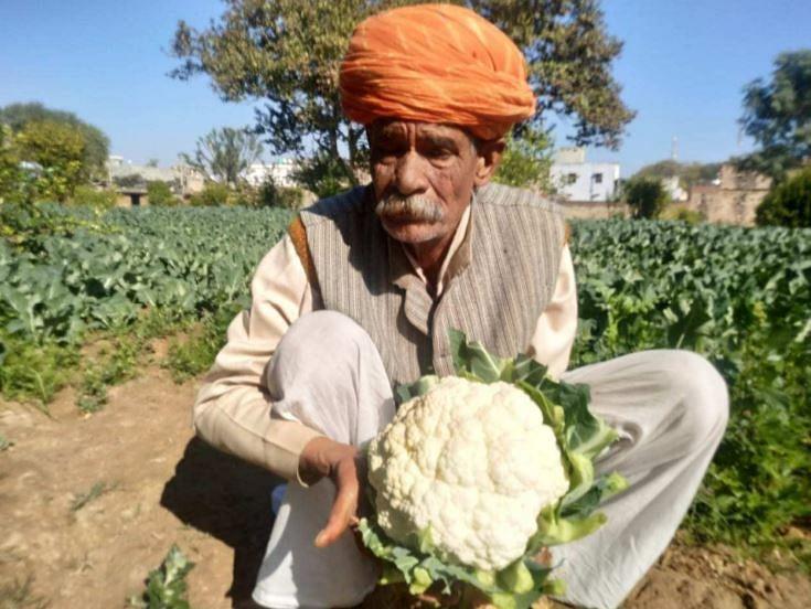 25 Kg Cauliflowers, 3-Ft Brinjals & Padma Shri: 72-YO Farmer is Amazing