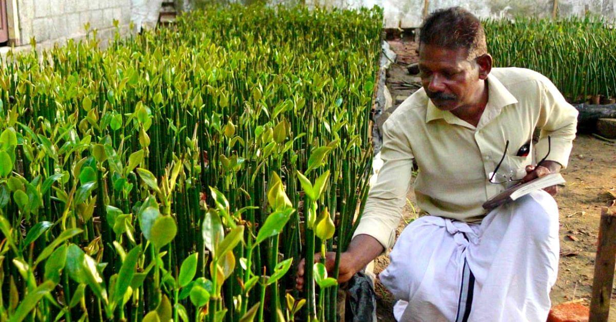 In 5 Years, Fisherman Plants 75000+ Mangrove Trees Along Kerala's Coast!