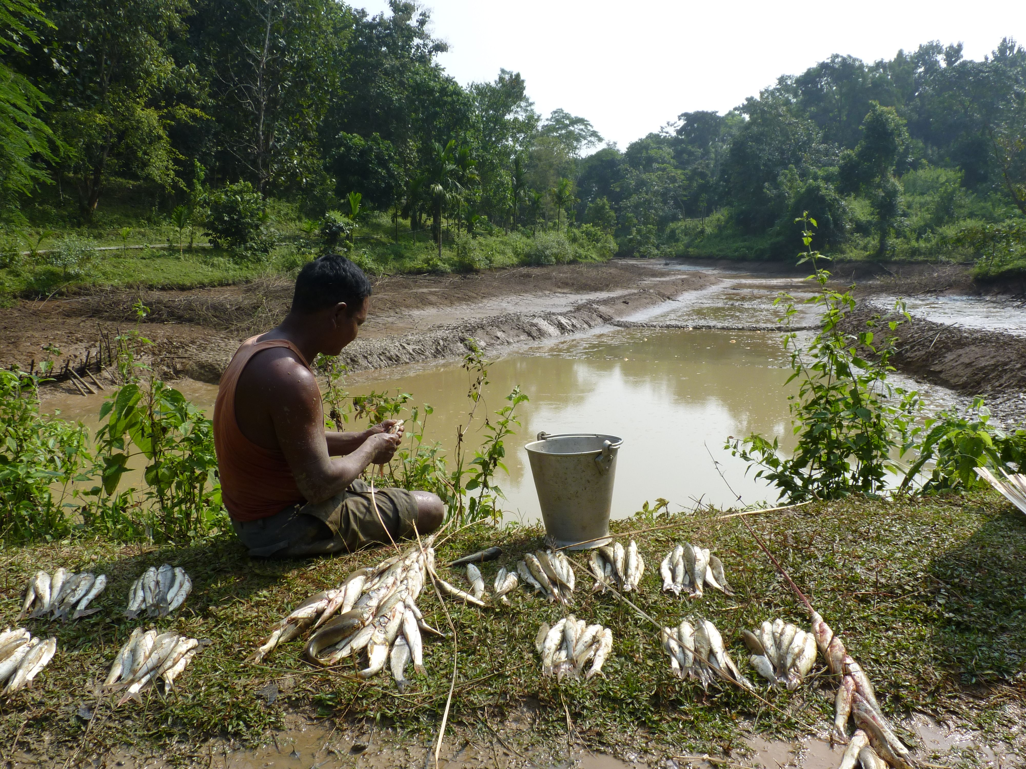 Meghalaya Govt Peon Builds Fish Ponds With Own His Hands, Sells 800kg of Fish/Year