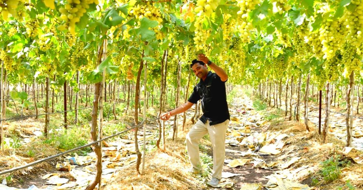 Nashik Grape Farmer Saves 2 Crore Litres of Water Despite Droughts. Here's How!