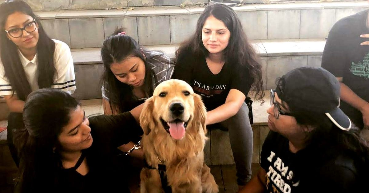 Punekars, These Therapy Dogs are all You Need to Fight Stress This Weekend
