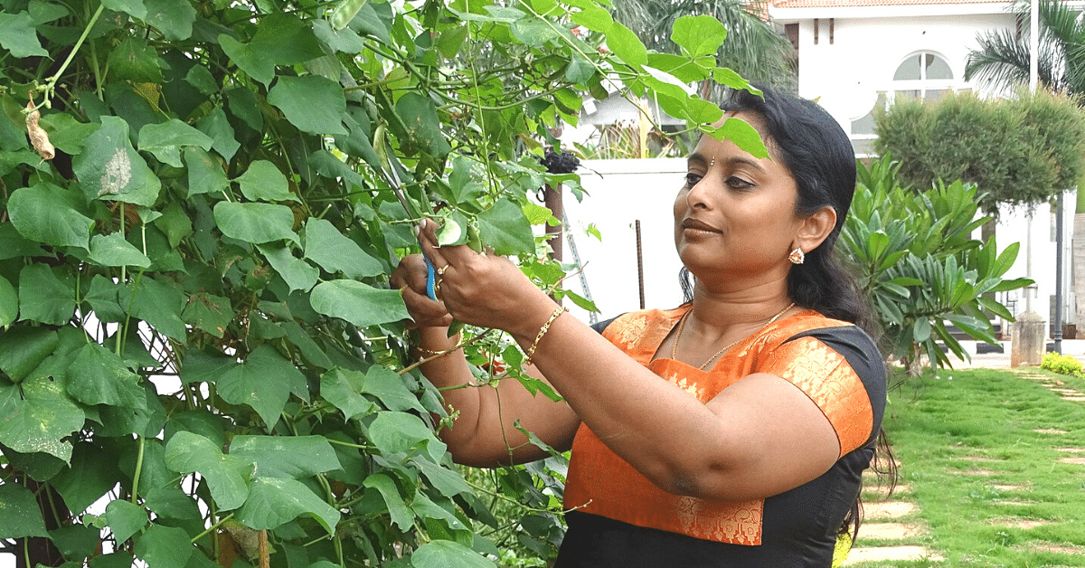 Mint In Pots To Growing Veggies to Feed Her Family: B'luru Lady's Inspiring Story