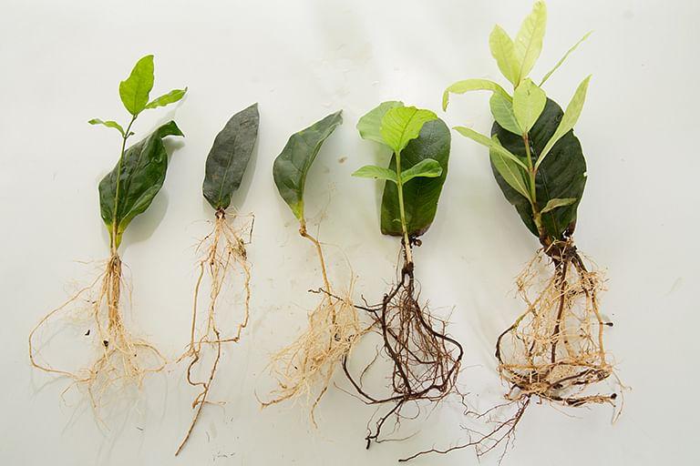 organic-farming-leaf-tissue-culture-tamil-nadu-low-cost-innovation