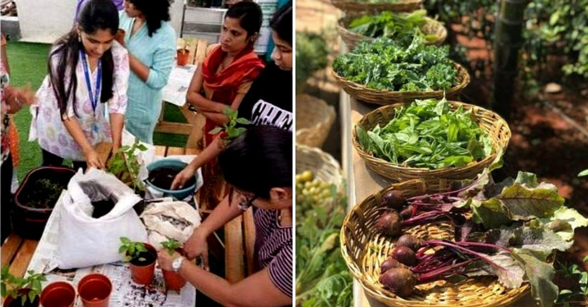 Stop Killing Your Plants! Learn to Grow Microgreens, Ayurvedic Herbs in 3 Hours