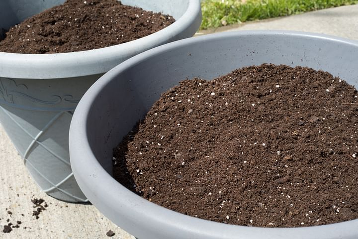 & demarcate space to grow the plant & get the soil ready