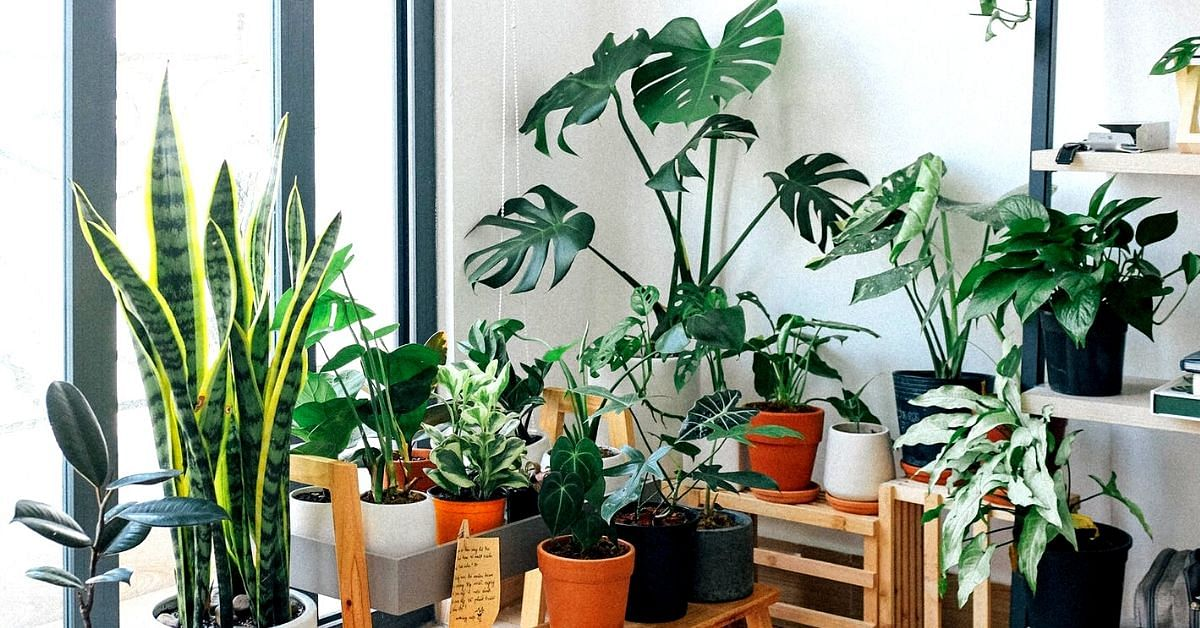 How to Protect Houseplants From Pests: 6 Zero-Waste & Organic Ways