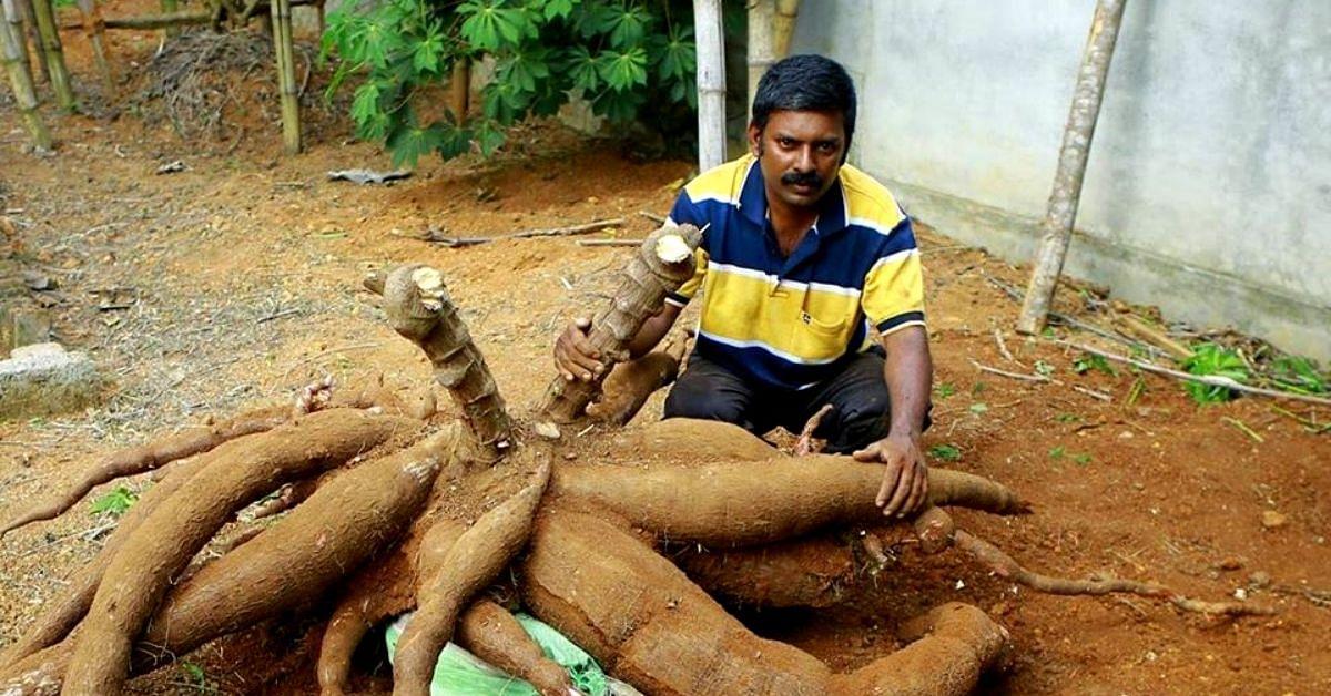 Kerala Cable Operator Takes up Organic Farming, Grows Record-Setting Tapioca, Okra