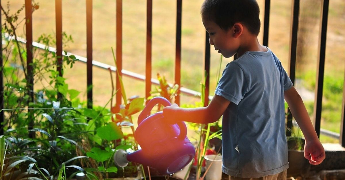 Dream of Growing an Organic Vegetable Garden? You Can Start at Just Rs 279!