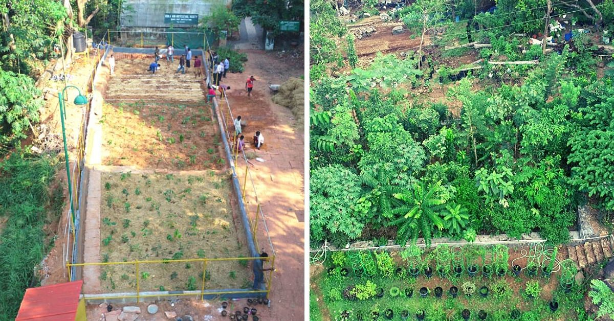 How to Grow a Forest Using The Miyawaki Method In Minimal Space