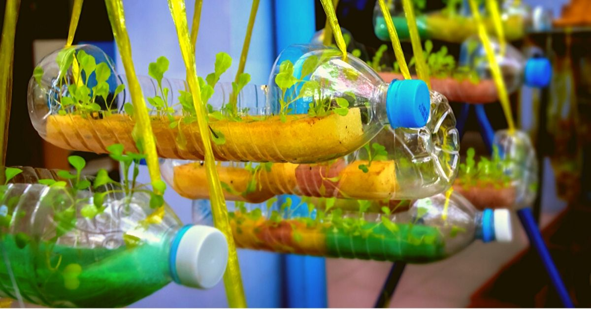 How to Build a Hydroponic Unit for Your Balcony With Just Bottles & Boxes?