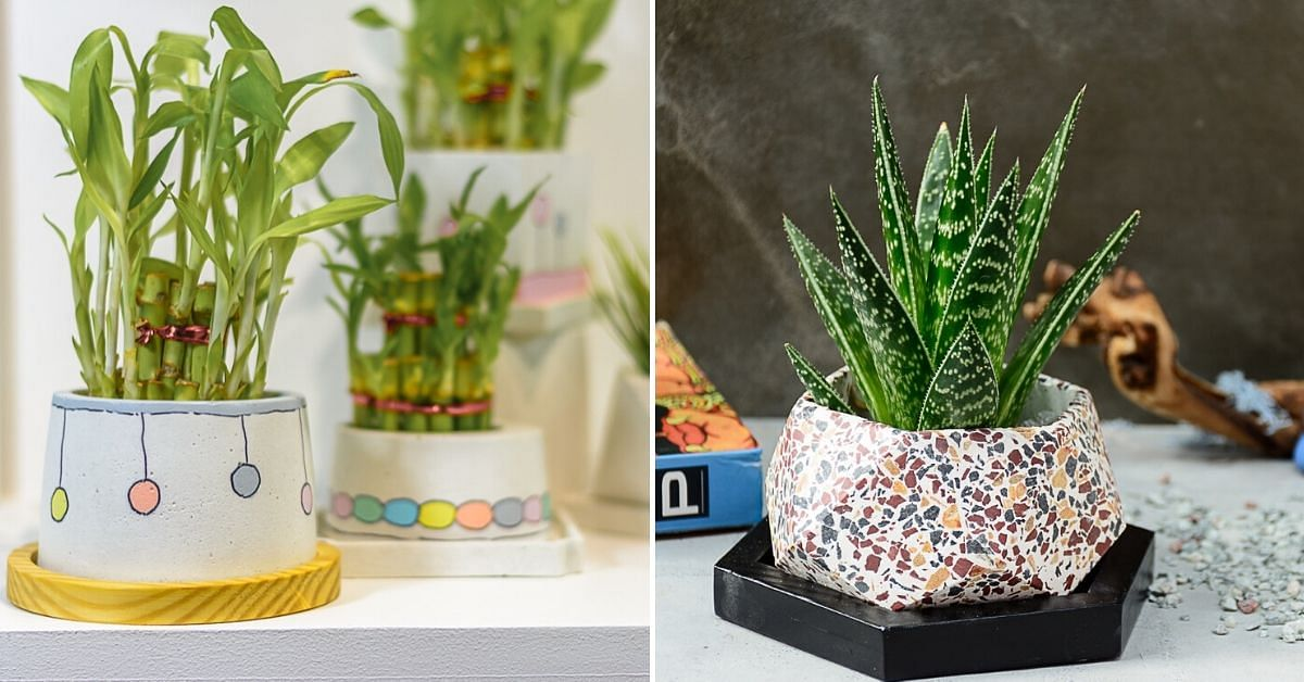 These Reclaimed Concrete Planters Are Exactly the Cool Your Plants Need!