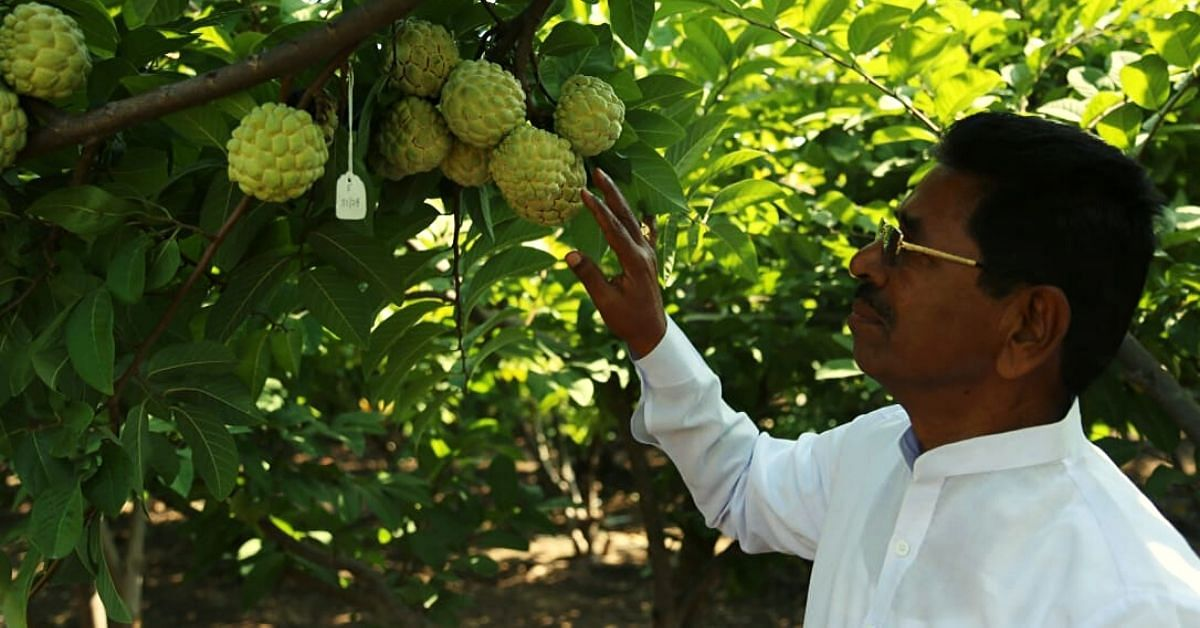 Farmer Develops New Custard Apple That Doubles Yield, Has Fewer Seeds & More Pulp
