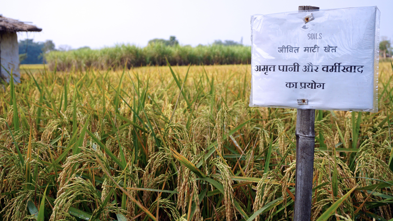 Kedia organic farming