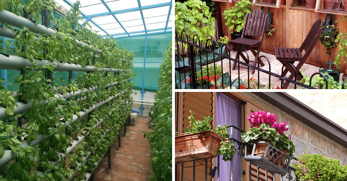 Experts Answer: How To Start Your Own Terrace Garden
