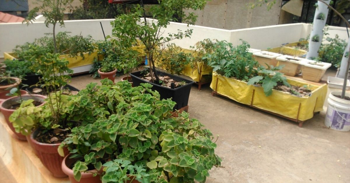 Experts Answer: How to Get Terrace Gardens to Yield More Crops?