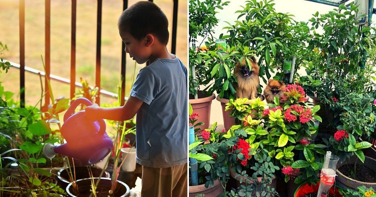 Experts Answer: How to Start an Organic Farm at Home?