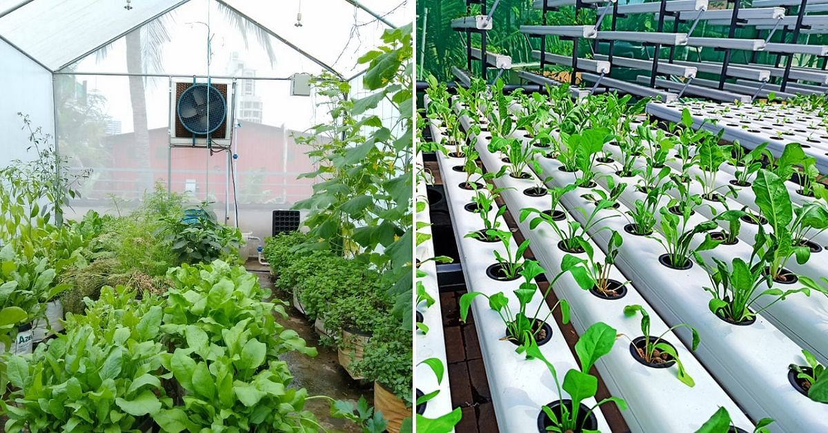 kochi hydroponics workshop