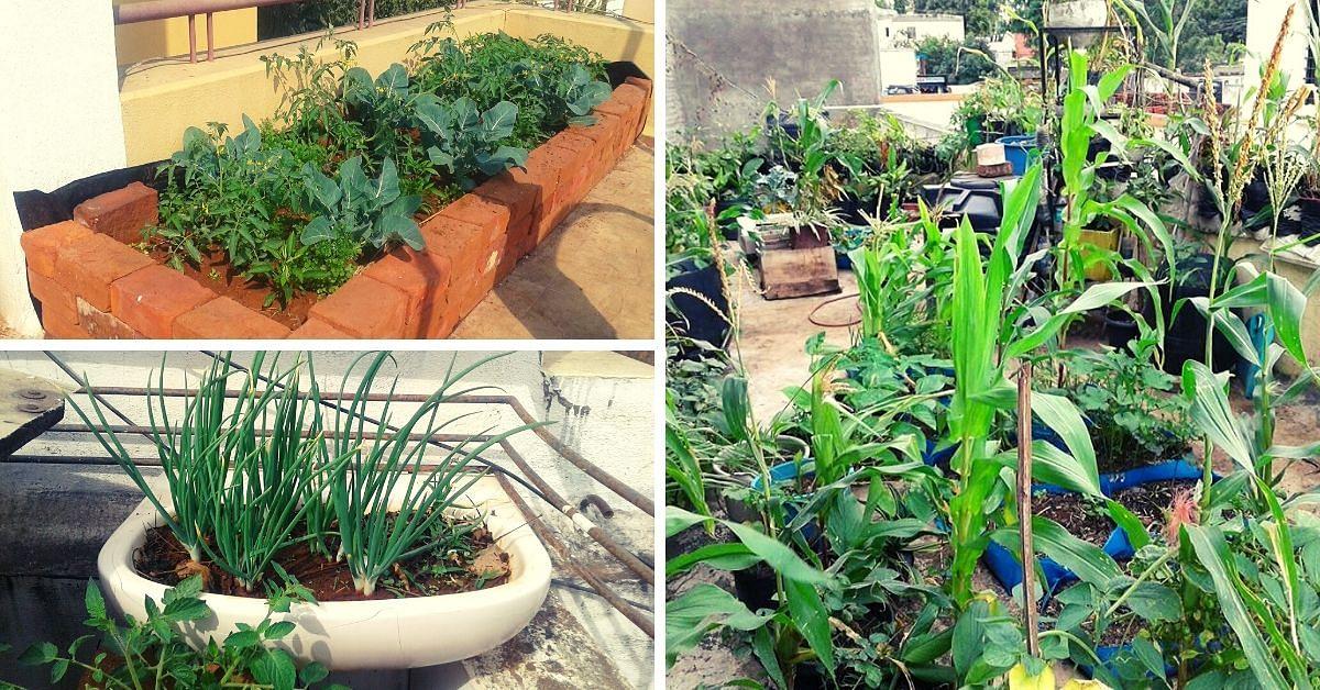 Nashik Man Uses Kitchen Waste, Grows 35 Organic Veggies In 3-Tier Terrace Farm!