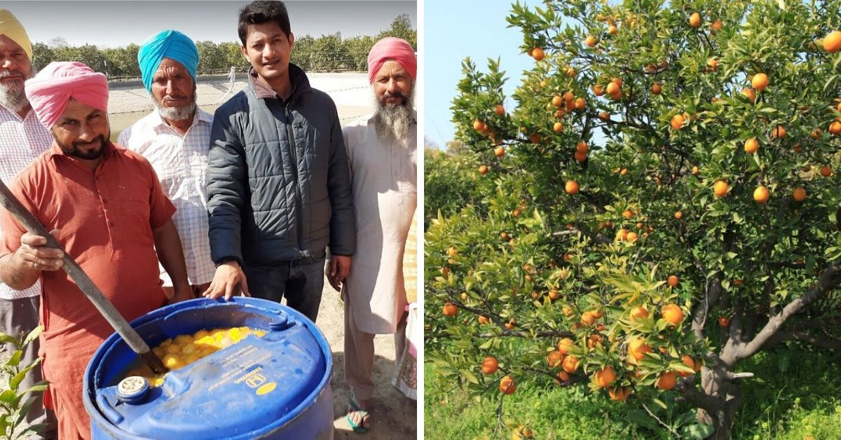 Fruit Waste Could Give Cheap Organic Fertilisers in 90 Days. Punjab Farmers Share How!