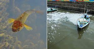 kerala phosphate fish study