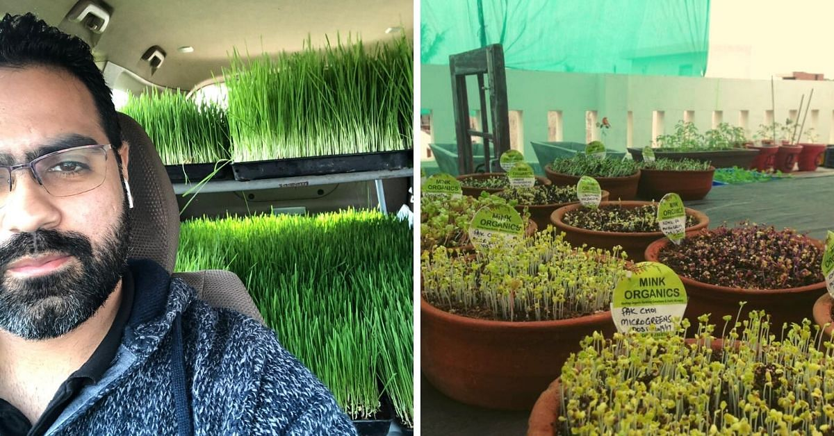 Punjab Man Quits Job, Sets up Organic Gardens in Homes For Affordable Superfoods