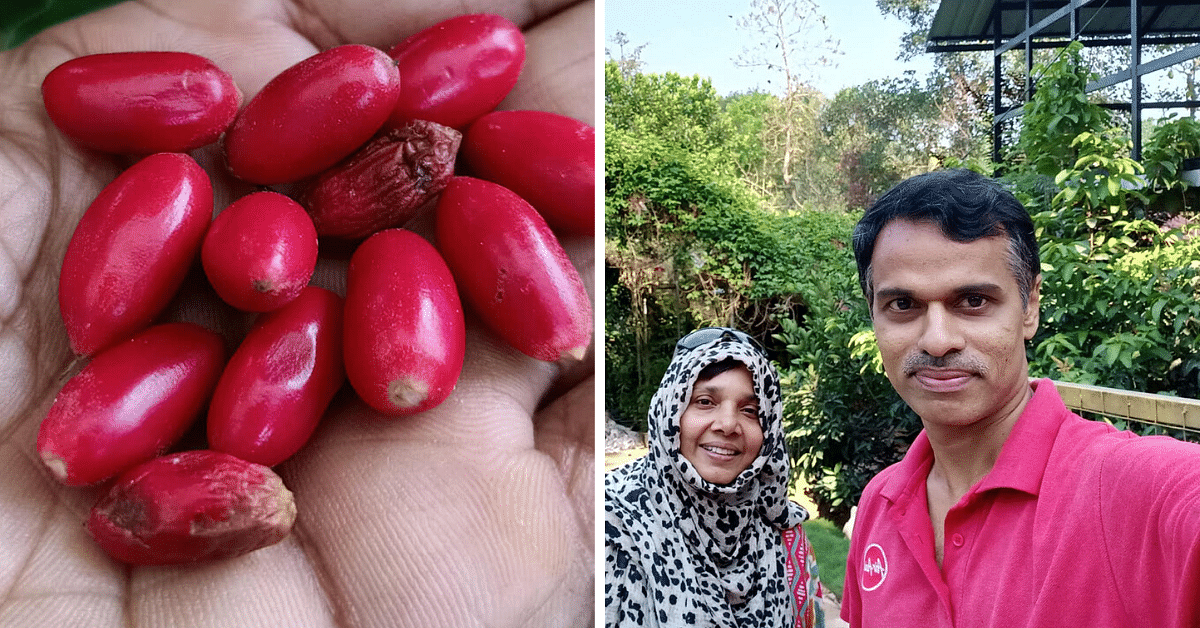 Kerala Techie Quits Job, Now Farms 550 Exotic Fruits From Across The World!