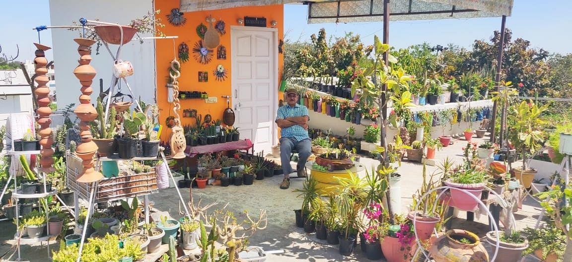 urban gardening covid-19 lockdown