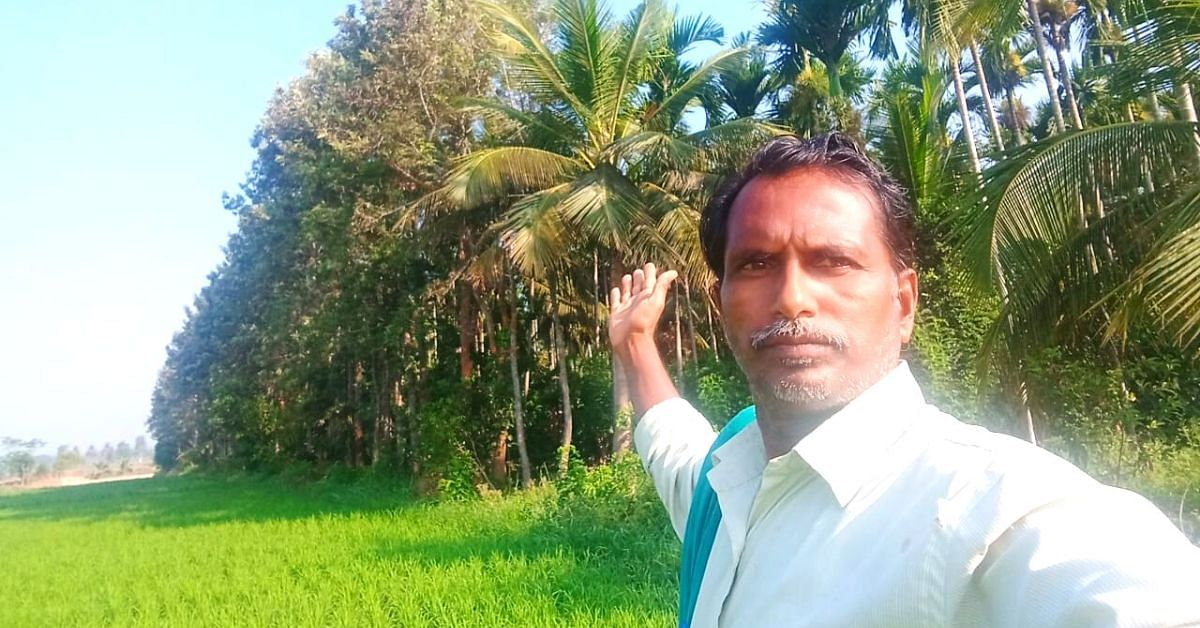 5-Layer Mini Forest in 5 Acre Land Boosts Karnataka Farmer's Annual Income to 25 Lakh!
