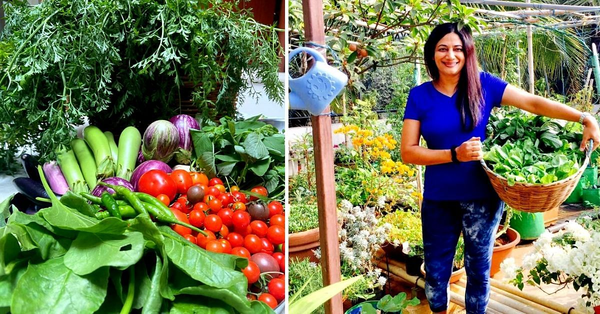 Vegetable, Fruits, Herbs: B'luru Woman Shares How She Grows 80+ Plants at Home