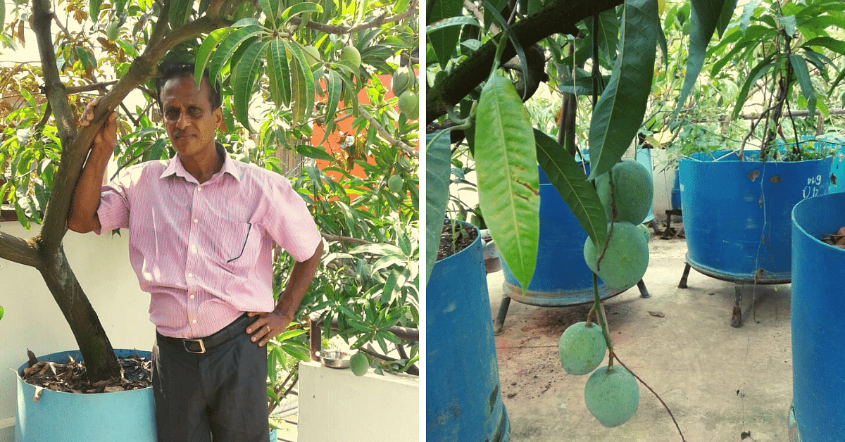 Kerala Man Grows 50+ Mango Varieties On Terrace, Including One Named After His Wife