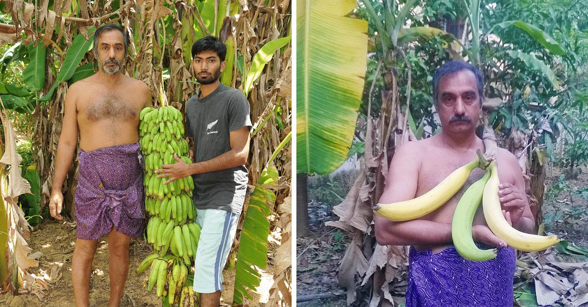 430+ Varieties of Bananas: Kerala Man's 3-Acre Farm Bears Harvest Worth Over a Lakh