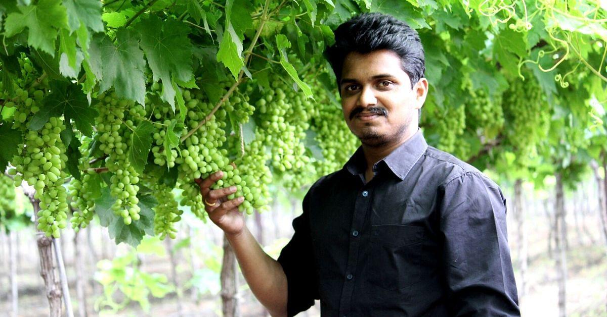 Making Raisins on Grape Vines: Pune, Nashik Farmers Innovate to Tackle Lockdown!