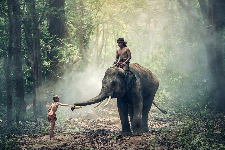 Elephants Help Humans