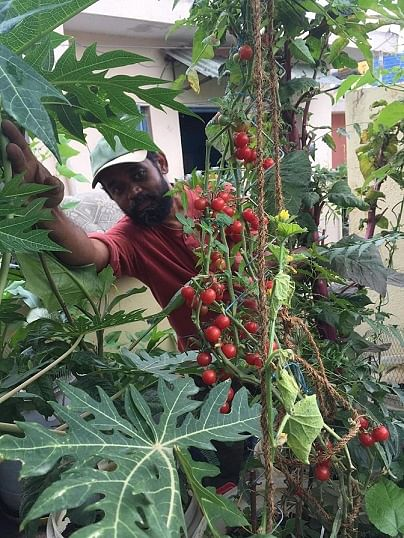 This Bengaluru Man Will Convince You to Grow And Eat Weeds, And They Are Delicious!