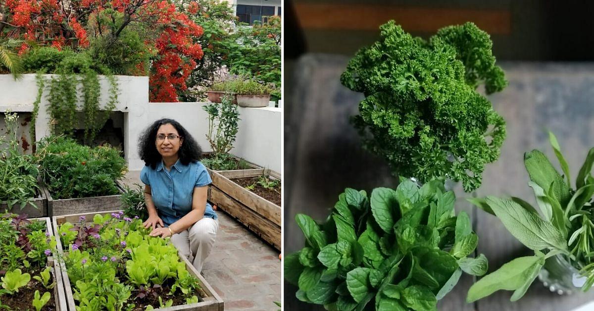 Delhi Architect Shares Secrets To Create A Chutney Garden In 3 Steps