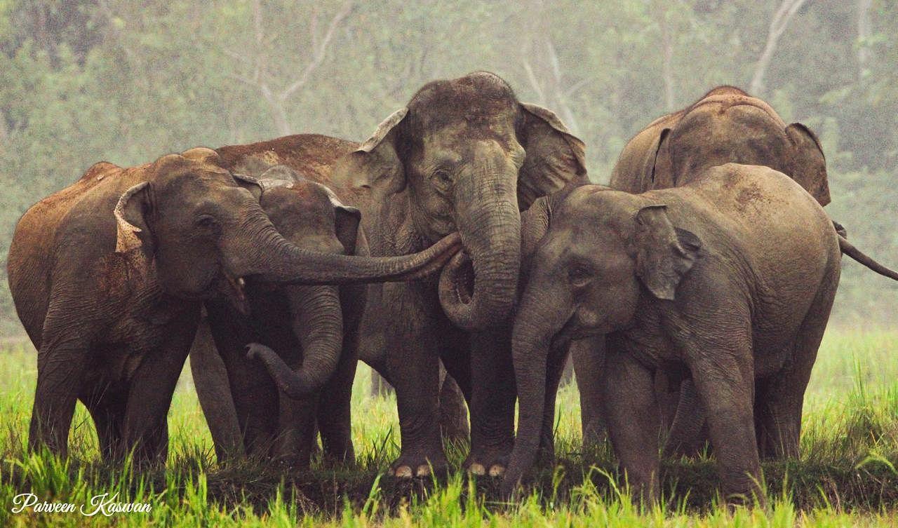 elephant rescue