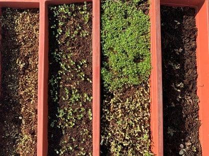 Plants have a symbiotic relationship: Dr Biradar