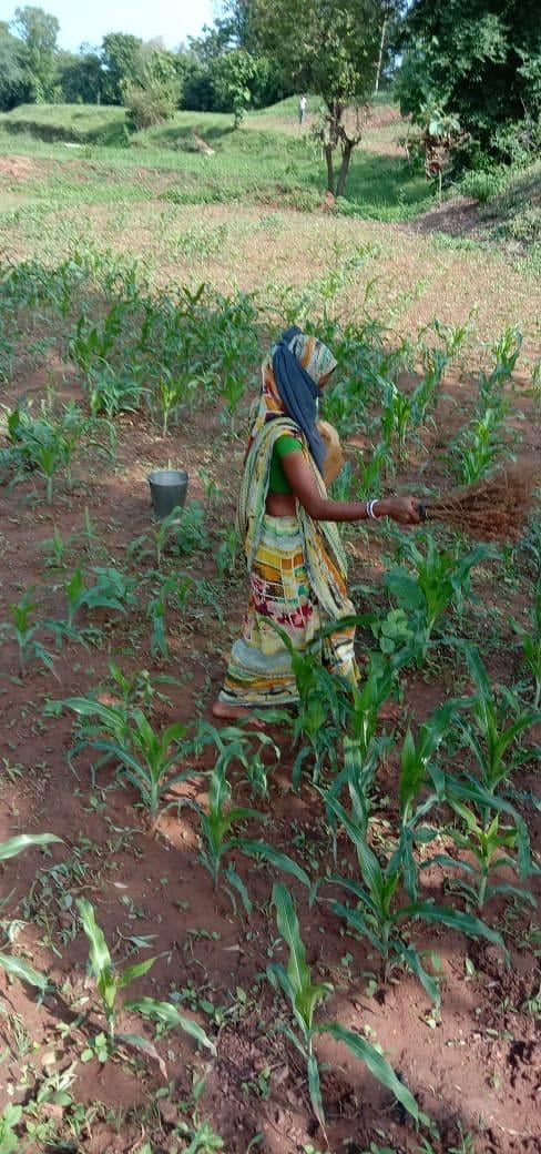 Kitchen Garden Model Helps 2000 Families In Gujarat Feed 7500 Others