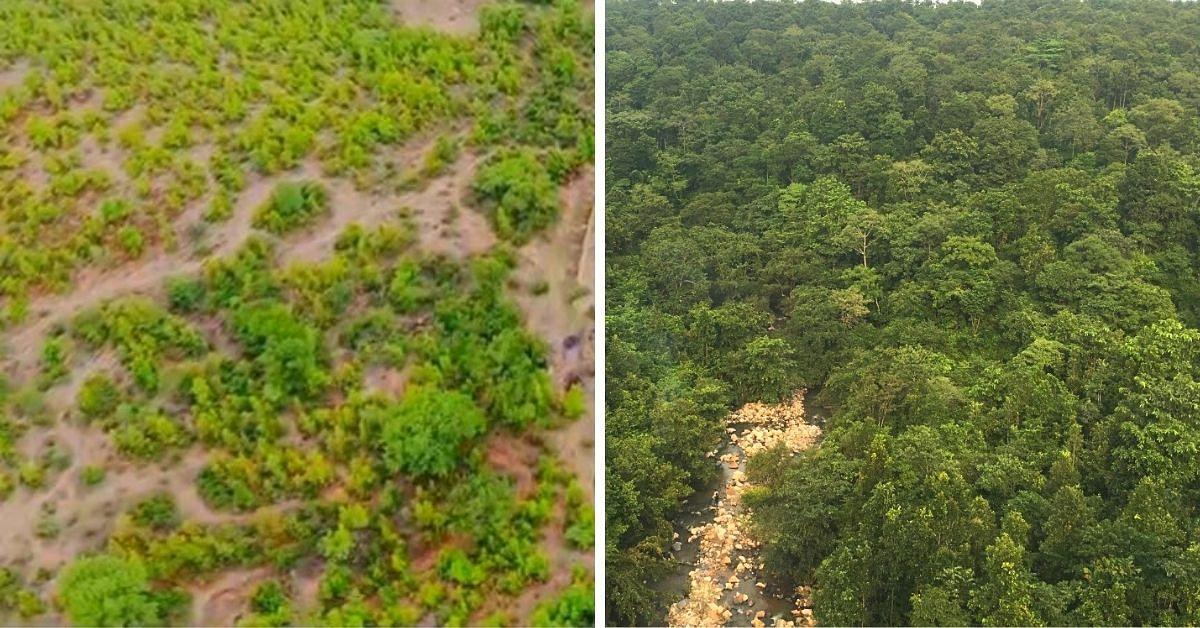 Com 3 árvores Lakh, Jharkhand IFS Officer transforma a floresta em 4 anos 2