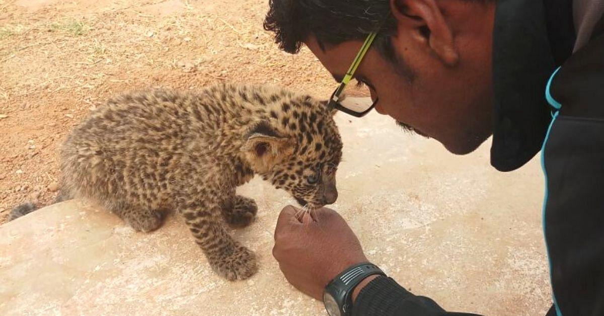 Engenheiro de Chhattisgarh desiste do trabalho para lutar contra caçadores de tigres;  Limpa centenas de armadilhas 4