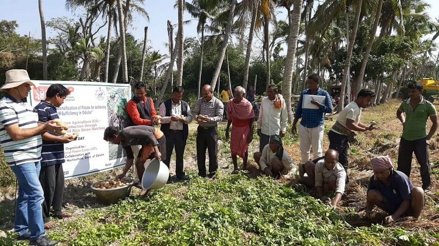 Idisha Farmer's Idea economiza 80% de água, evita a queima de restolho 2